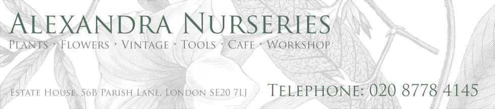 Alexandra Nurseries - Plants - Vintage - Cafe - Penge